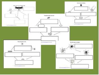 Bugs & Arachnids Package