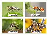 Bugs Flashcards with Vocabulary