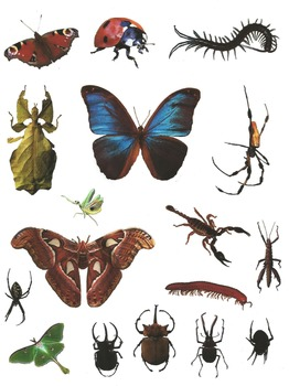 Bugs Galore! Realistic Commercial Photo Clip Art