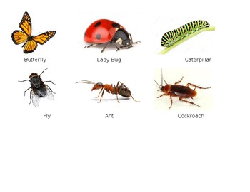 Bugs & Insect Sort