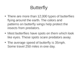 Bugs Insects - Facts about butterfly, spider, moth, cockro