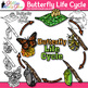 Bugs and Insects Life Cycle Clip Art Bundle {Great for Tea
