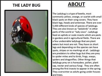 Bugs & Insects Posters