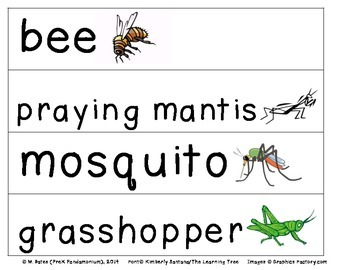 Bugs Insects Theme Pocket Chart Words