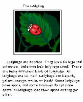 Bugs Activities Center