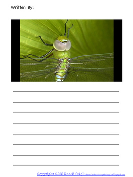 Bugs Picture Stories