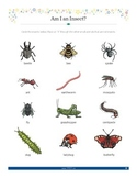 Bugs: Small Crawling and Flying Animals