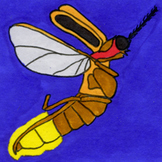 Bugs Sticker or Clipart Firefly