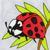 Bugs Sticker or Clipart Ladybug
