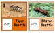 Bugs Theme: Real bugs Discovery cards