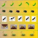 Bugs Theme:  Same and Different Smartboard Activity