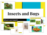 Bugs and Insects- A Science Packet
