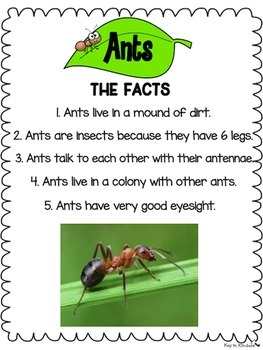 Bugs and Insects Math and Literacy
