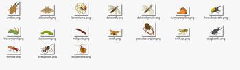 Bugs or Creepy Crawlies Clipart Set 2