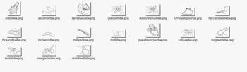 Bugs or Creepy Crawlies Clipart Set 2