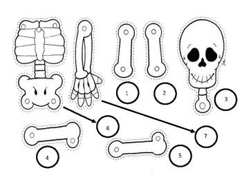 image regarding Printable Human Skeleton to Assemble named Produce A Skeleton Worksheets Instruction Supplies TpT