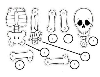 Build A Skeleton Review Game  (For any Subject, Any Topic!)