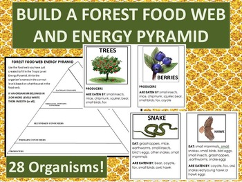 Build  Forest Food Web and Energy Pyramid-28 organism information cards