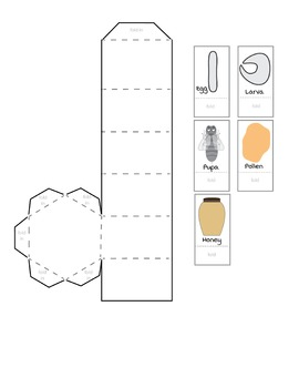 Build Your Own Honeycomb! | Maker Space, Science, Fun, Printable
