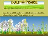 Build Your Own Prairie