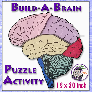 Human Brain: Build-a-Brain Puzzle Activity by Activities ...