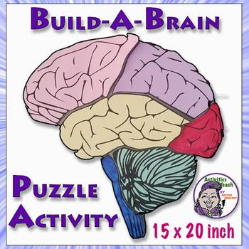 Human Brain: Build-a-Brain Puzzle Activity