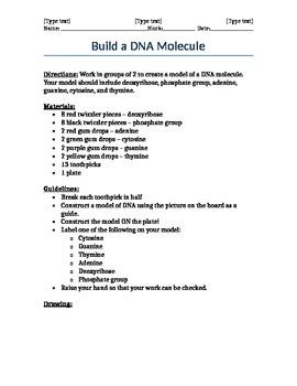 Build a CANDY DNA Molecule Model Lab Worksheet