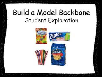 Build a Model Backbone Student Exploration