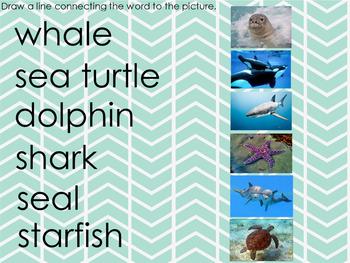 Building Background Knowledge - Ocean Animals