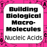 DNA Nucleic Acids Biochemistry Building Biological Macromolecules High School