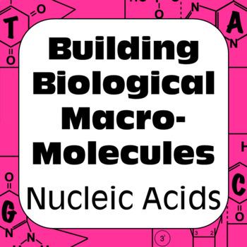 DNA Nucleic Acids Biochemistry Building Biological Macromolecules High School