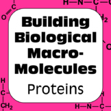 Proteins Biochemistry Building Biological Macromolecules High School Biology