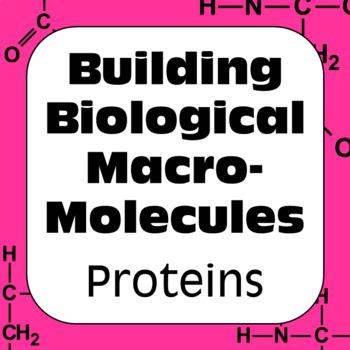 Proteins Biochemistry: Building Biological Macromolecules