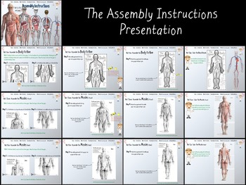 Building a Human Body Model