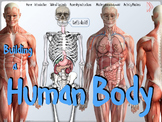 Building a Human Body Model