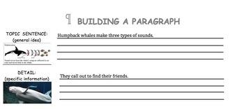 Building a Paragraph