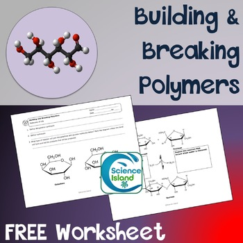Building and Breaking Polymers Worksheet