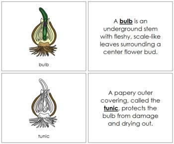Bulb Nomenclature Book