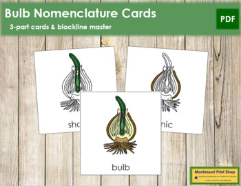 Bulb Nomenclature Cards