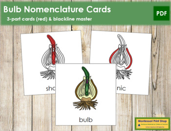 Bulb Nomenclature Cards (Red)