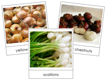 Bulb Vegetable Picture Cards