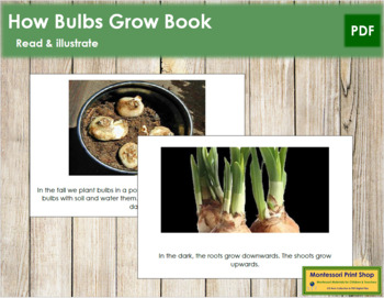 Bulbs: Read and Illustrate