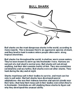Bull Shark Overview and Coloring Worksheet