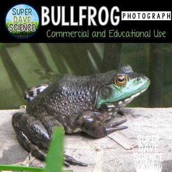 Bullfrog Photographs