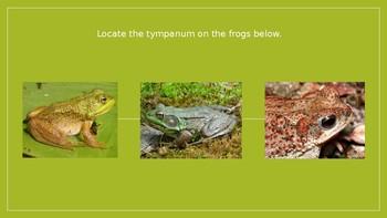 Bullfrog at Magnolia Circle vocabulary