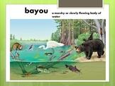 Bullfrog on Magnolia Circle Vocabulary
