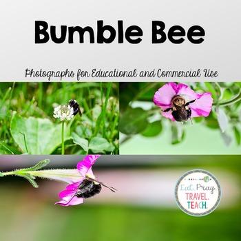 Bumble Bee Stock Photos