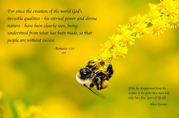 Bumble Bee Working on Goldenrod with Quote