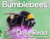 Bumblebee Close Read