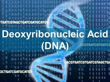 Bundle: DNA, RNA, Transcription, Translation PowerPoint presentations